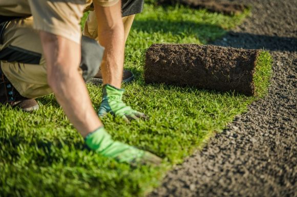 Mackay Landscaping architect caring for a garden with green grass
